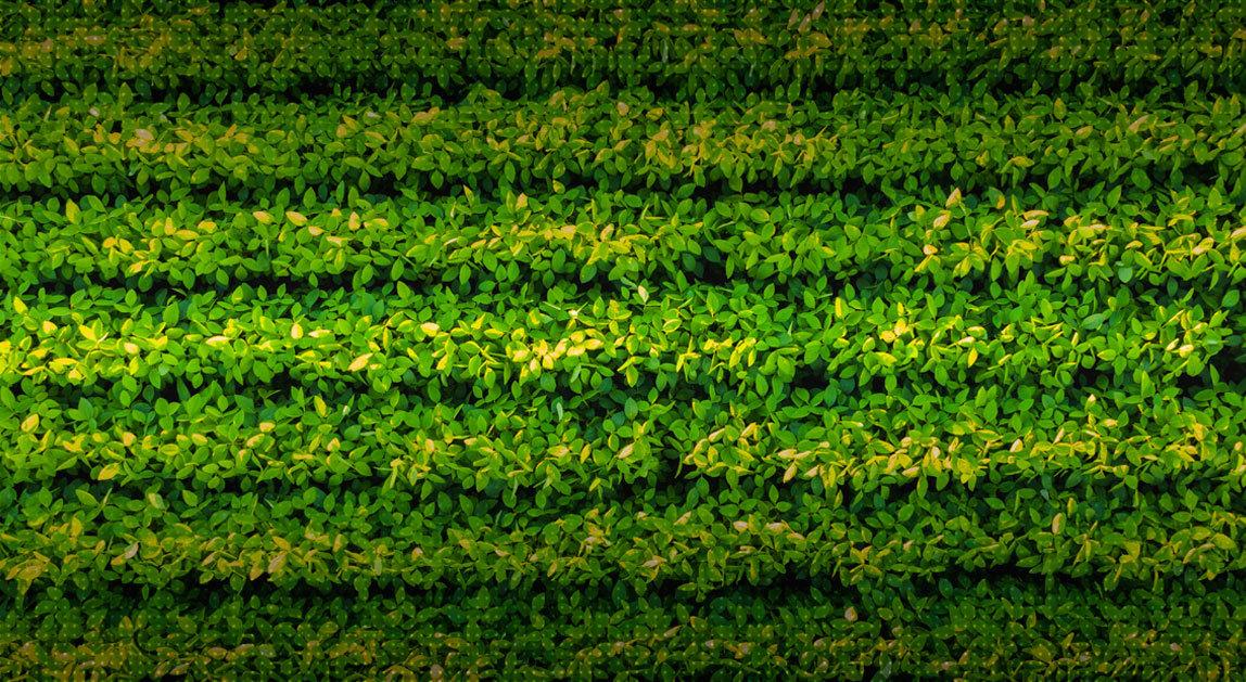 Índices Vegetación